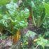 Grøntsagsproduktionen er i fokus hos Sandmosen 38 – både i markedshaven og polyt…